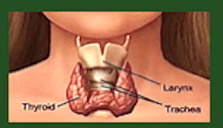 Image of thyroid f