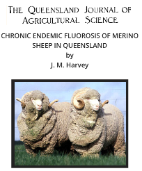 F. Merino Sheep Qld. copy