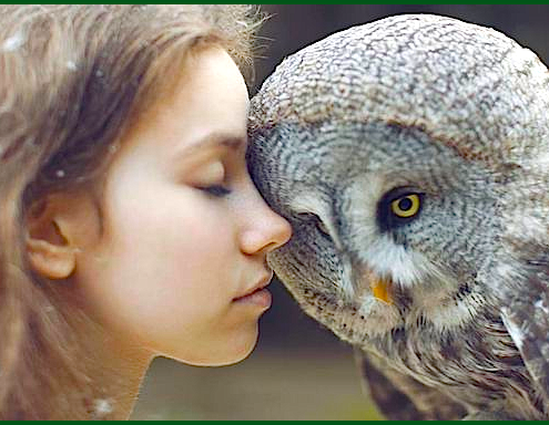 girl-owl-head-to-head-f