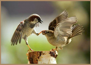 2 sparrows on a stump f