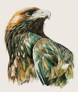 painted-eagle-head