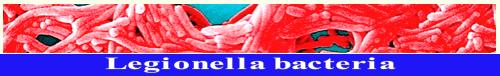 legionella-bacteria-f