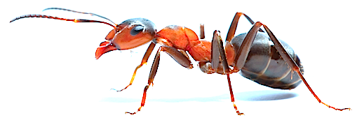 ant-looking-left