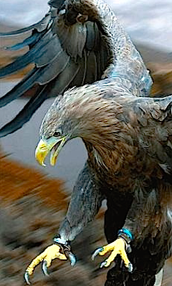 landing-eagle-f