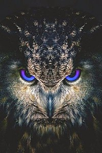 dark-owl-head