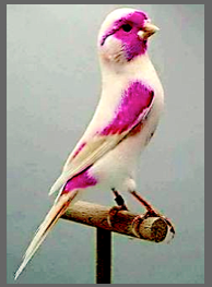 pink-gray-bird-f