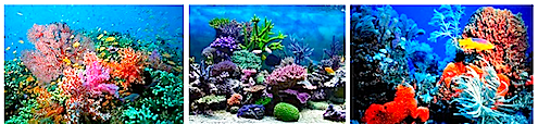 # coral images
