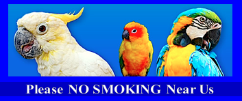 IMAGE OF PARROTS NO SMOKING