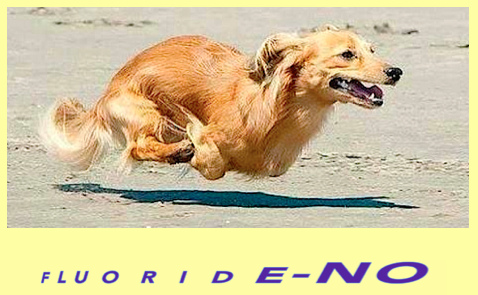 dog-fluoride-no-f