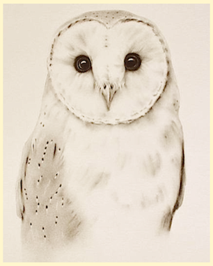 pale-owl-f