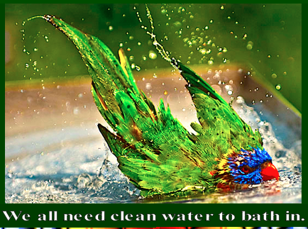 We all need clean water image
