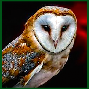 owl-head-green-f