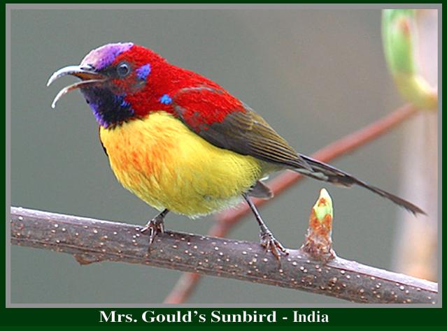 sunbird-india-f