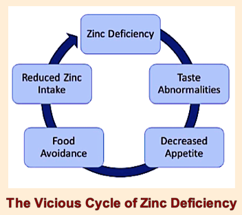 the-vicious-cycle-of-zinc-deficiency-f