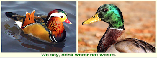 we-say-dring-water-not-waste-f