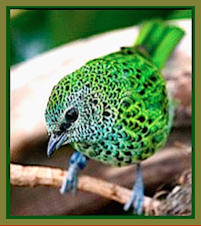 green-spotted-bird-ff