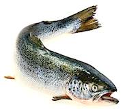 curved-salmon-small
