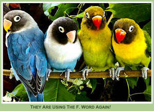 4-birds-with-captions-f