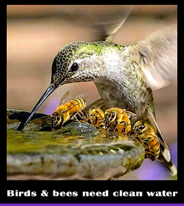 birds-and-bees-f