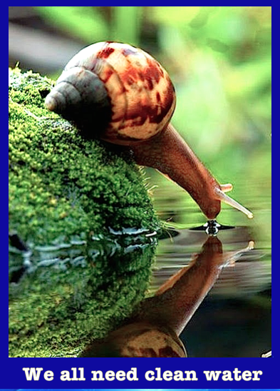 snail-we-all-need-clean-water