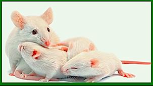 4-mice-f