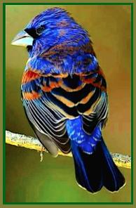 mutli-colour-sparrow-ff