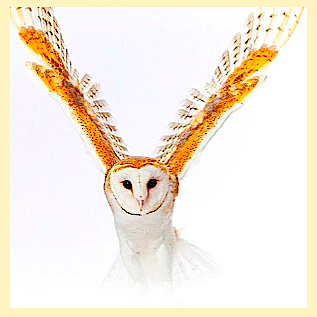 barn-owl-final-f