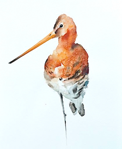 gadwit-bird-painting