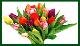 tulips-f