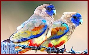 2-small-parrots-f
