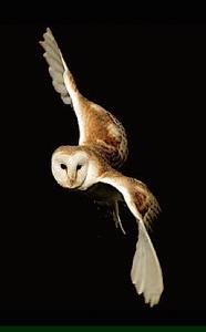 owl-angle-f