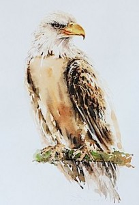 eagle-drawing