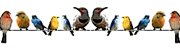 mixed-birds-on-line