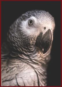 africa-gray-f
