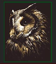 owl-head-fff