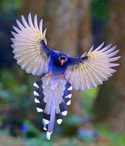 bird-landing-2