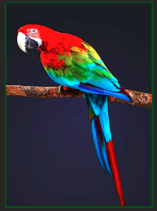 red-blue-parrot-ff