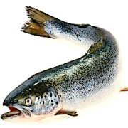 curved-salmon