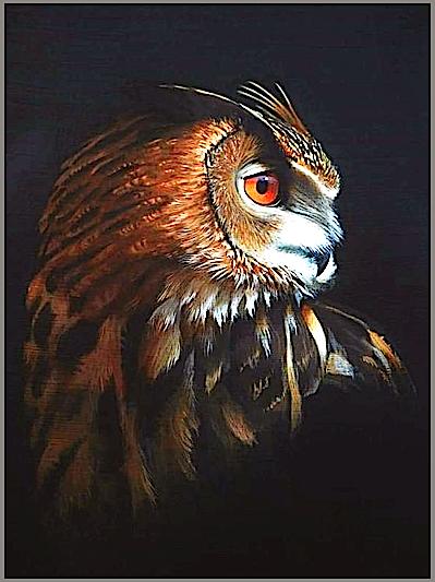 owl-gray-frame