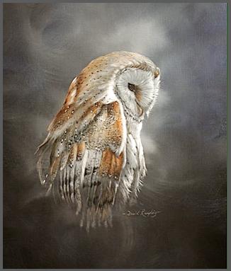 owl-imag-gray-frame