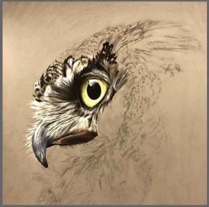 owls-head-drawing-f