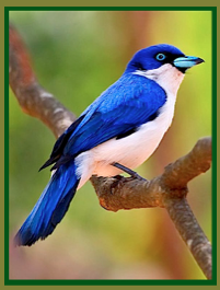 blue-white-bird-ff