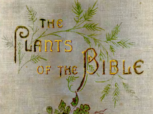 part-cover-plants-bible