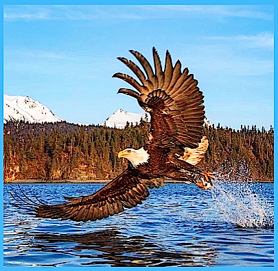 eagle-over-water-f
