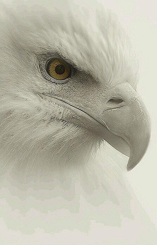 white-bird-head