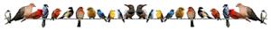 mixed-birds-on-line