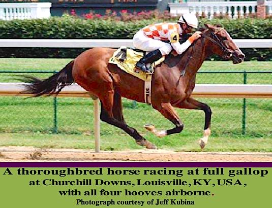 racehorse-usa-f