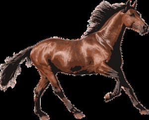 bay-race-horse