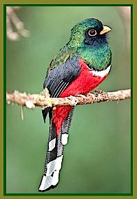 red-black-green-bird-ff