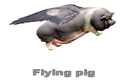 flying-pig-a
